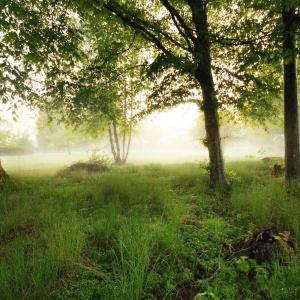 Morning-Fog-The-Magnificent-Natural-Scenery-